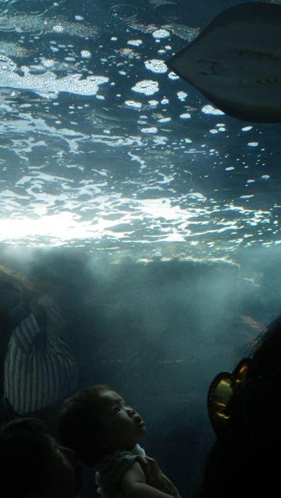 2011−8enosima.jpg
